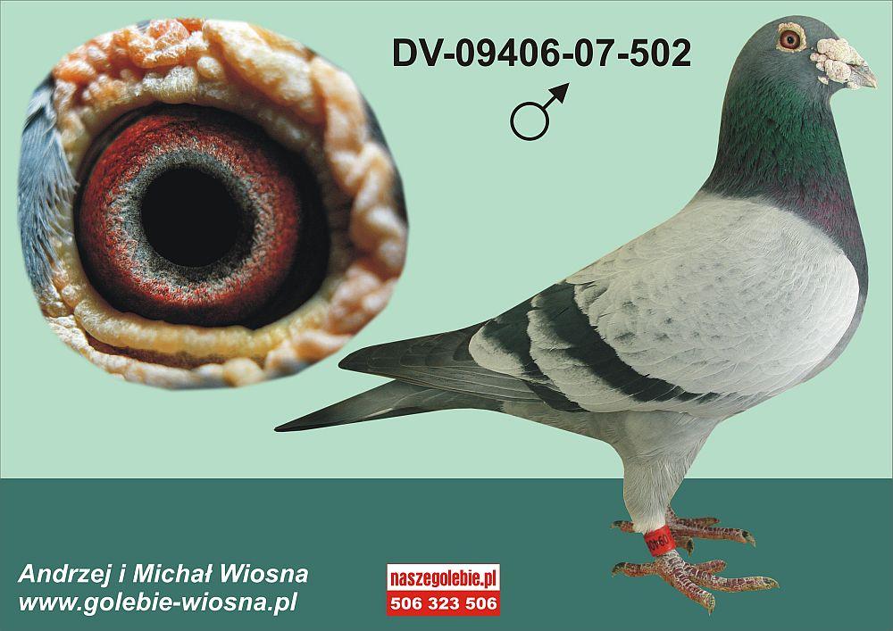 Gołębie Wiosna Pary Rozpłodowe